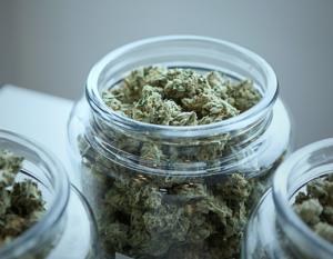 wholesale cannabis canada